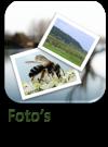 Fotos1.1